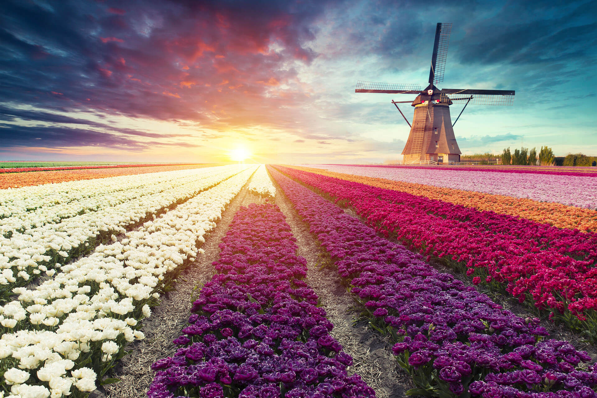 Netherlands: Submit Residence Apps Deadline for UK Nationals Extended