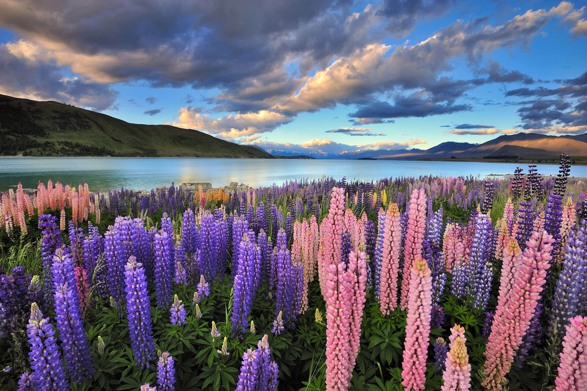 New Zealand: Phase-Outs Before Accredited Employer Work Visa Roll-Out