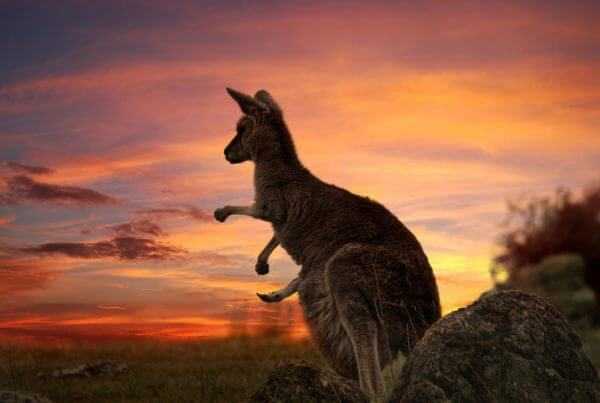 Australia: New Priority Consideration for Skilled Visa Applications