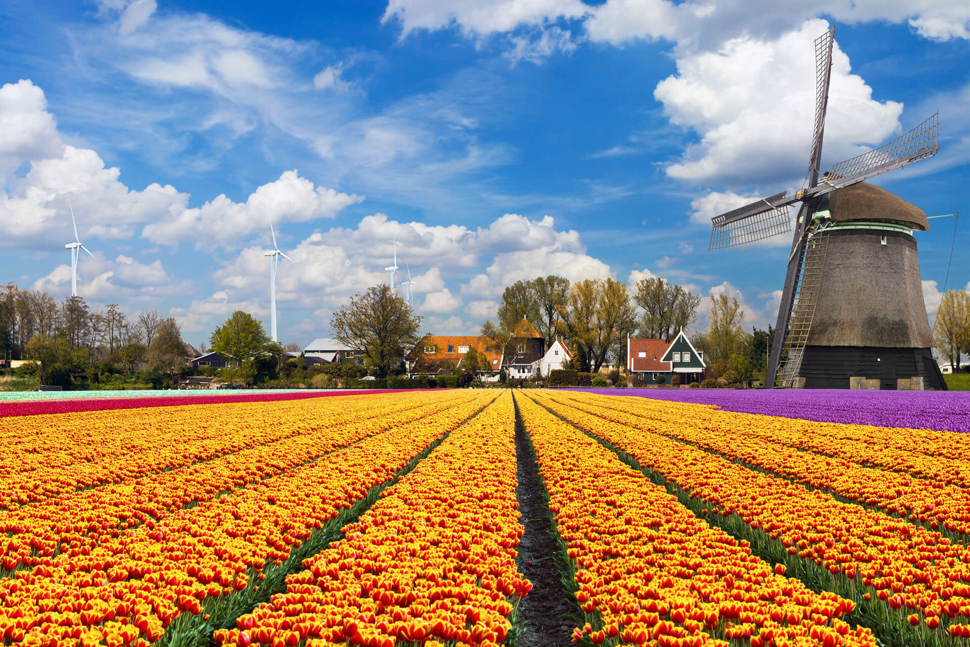 Netherlands: Quarantine Requirements for Vaccinated Travelers Removed
